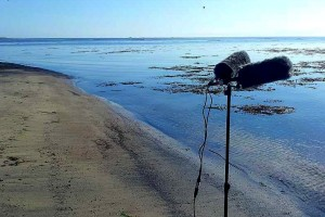 Mics-by-the-calm-North-Sea