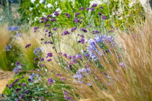 mediterraneen-jardin